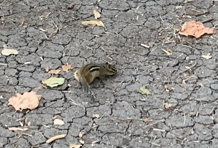 animal life on a walk